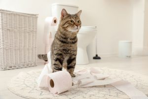 cat diapers are a great way to eliminate cat urine accidents on carpet